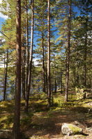 In the Tiveden National Park in Sweden