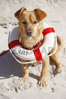 kleiner Hund mit Rettungsring