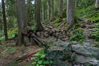 Wanderpfad in Wald