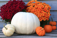 Thanksgiving, Fall (Autumn), Harvest symbols