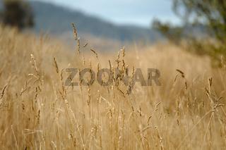 Dry autumn meadow