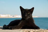 Stray cat on Cadiz, Spain