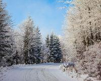 Ski trail runs along the road
