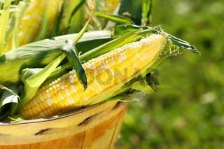 Corn in an apple basket