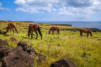 Horses on easter island cliffs