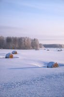 Siberian rural winter landscape with hay rolls in the field covered by snow with birch forest on background