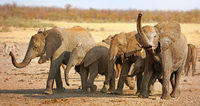african elephants with mud, south africa, wildlife