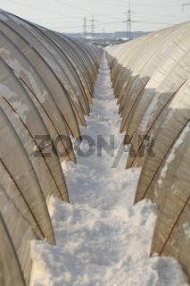 Erdbeerfeld im Winter / Greenhouse in winter