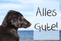 Dog At Ocean, Alles Gute Means Best Wishes