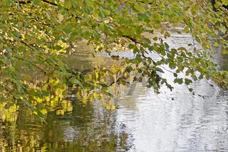 Herbst an der Aach bei Singen am Hohentwiel