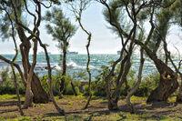 Tuscan Coast near Livorno II