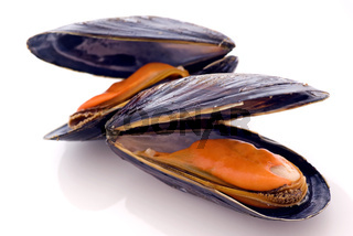 Open common mussel as closeup on white background