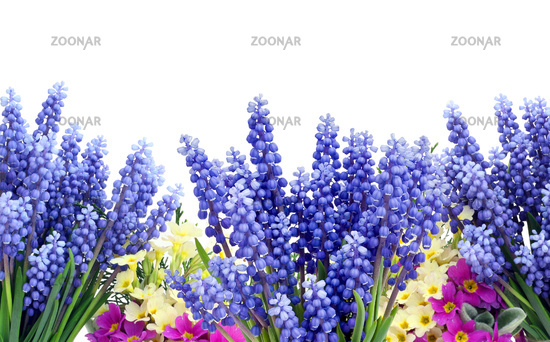 Blue yellow magenta flowers background