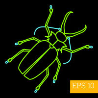 capnodis insect outline vector