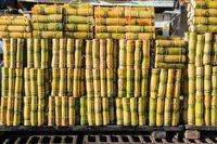 Packs of sugar cane sticks sold in the market in the city of Banos, Tunguragua, Ecuador