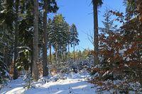 Winterwald snowy winter forest