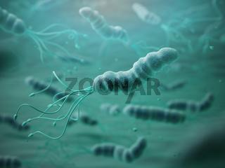 Helicobacter pylori in microscope. Bactreiias.