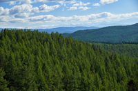 Altai mountains forest landscape in Ulagan Highlands