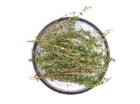 Thymian auf Teller - Thymus stems on plate