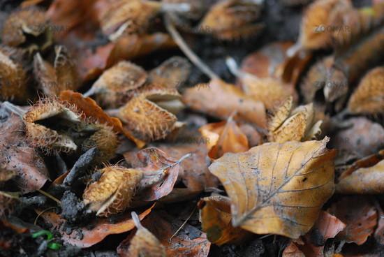 Foto Waldboden im Herbst / autumn