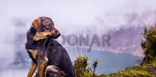 Dog at Quilotoa crater lake Ecuador