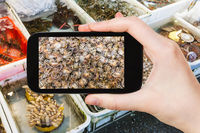 tourist photographs mollusks on market in China