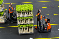 Mini-trucks hauling wagons with boxes of plants and flowers ready for shipment, Netherlands
