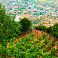 Monastery vineyard in Meteora