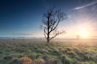 misty sunrise over marsh and dead tree