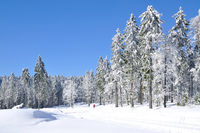 Winter in bavarian Forest,Germany