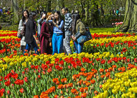 Tourists from Asia taking photos of blossoming tulips at Keukenhof Flower Gardens, Lisse, Netherland