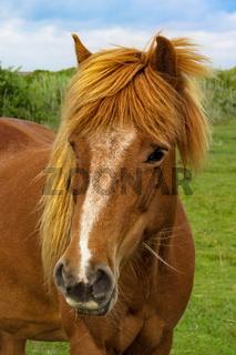 Hallo Pferd