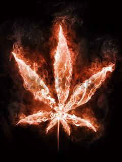 Marijuana in Fire