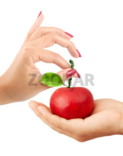 Girl gives the man an apple isolated on a white background
