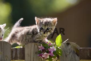 Kaetzchen auf Zaun, Kitten on fence