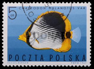 Poland - CIRCA 1967: A stamp - Vermiculated angel