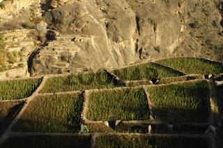 Kleinst-Felder für Getreide, Jebel al Alkhdar,Oman