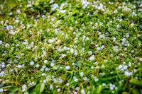 Hail on the grass