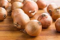 Fresh onion bulbs.