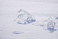 Rural winter landscape of meadow under snow