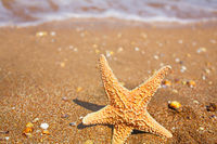 Starfish on the Beach in front of wave covered with foam, shot with copyspace
