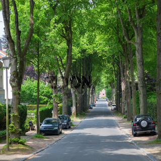 Road in a town with line or row of trees