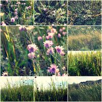Wild flowers in the grass collage of colorized images, set of toned pictures summertime vitality
