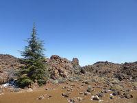 fir tree mountain landscape panorama