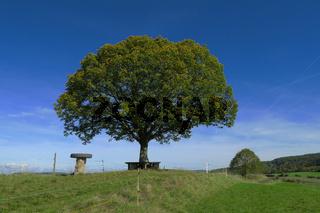 Sommerlandschaft mit Linde; limetree; Tilia;
