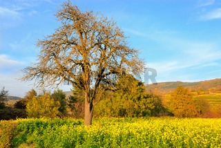 Sonniger Tag im Herbst