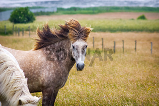 Pferd im Wind