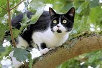 scared cat on a tree