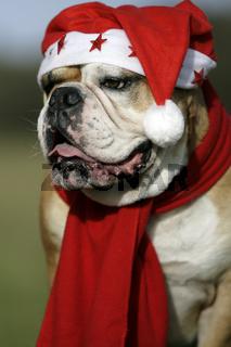Weihnachtsbullie