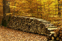 autumn, forest, woodpile
